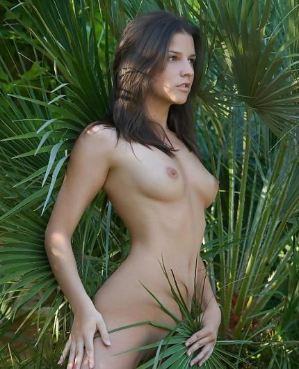 Eva Fan Palm By Femjoy